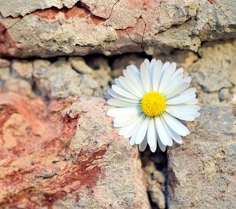 flower breaking through rock